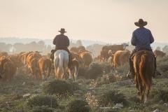 סוסים חוות דובי הובלת בקר -8511
