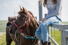 סוסים חוות דובי הובלת בקר -8039