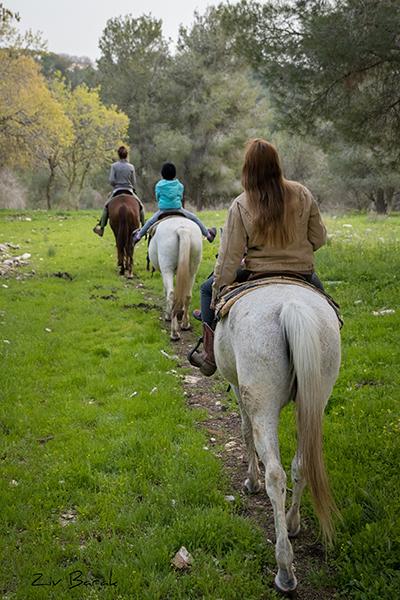 טיול סוסים רוני מאיה -6013