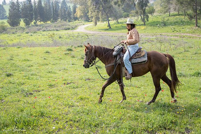 סוסים חוות דובי הובלת בקר -7892