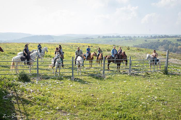 סוסים חוות דובי הובלת בקר -8004
