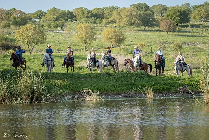 סוסים חוות דובי הובלת בקר -8238