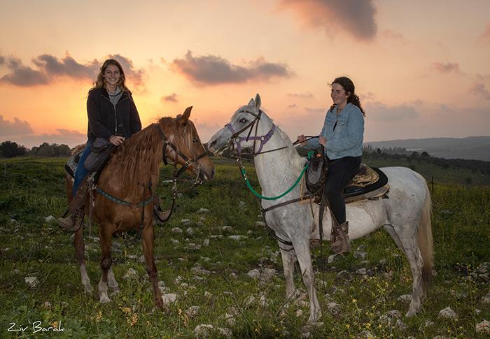 סוסים חוות דובי הובלת בקר -8603