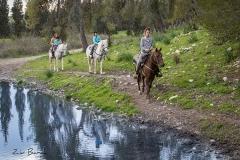 טיול סוסים רוני מאיה -5961