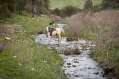 טיול סוסים רוני מאיה -5985