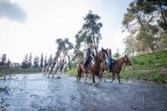 סוסים חוות דובי הובלת בקר -7875