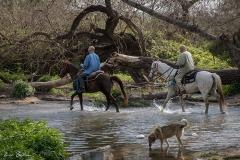 סוסים חוות דובי הובלת בקר -7907