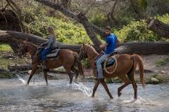 סוסים חוות דובי הובלת בקר -7909