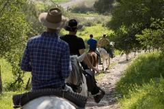 סוסים חוות דובי הובלת בקר -7958