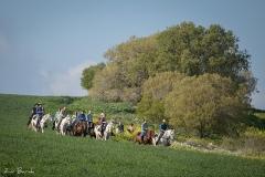 סוסים חוות דובי הובלת בקר -8117