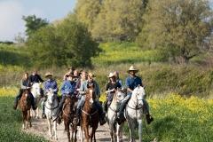 סוסים חוות דובי הובלת בקר -8130