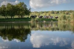סוסים חוות דובי הובלת בקר -8256