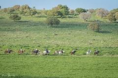 סוסים חוות דובי הובלת בקר -8305