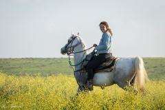 סוסים חוות דובי הובלת בקר -8341